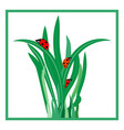 ladybug on grass in square card vector image vector image