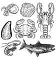 set hand drawn seafood design elements vector image