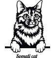 somali cat - cat breed cat breed head isolated vector image vector image