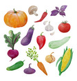 vegetables watercolor collection vector image vector image