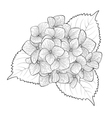 black and white flower hydrangea isolated vector image