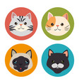 cute cats pets characters vector image