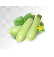 fresh vegetable marrow decorated with green leaf vector image
