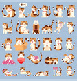 set cute calico cat character vector image