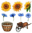 watercolor country flowers and wooden rustic vector image