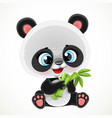 cute cartoon baby panda bear eating bamboo vector image vector image