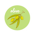 hand drawn olive oil vector image vector image