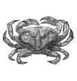 rock crab vintage vector image vector image
