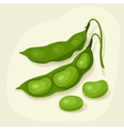 Stylized of fresh ripe bean pods vector image vector image