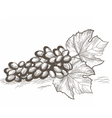 Vintage Grapes cluster isolated vector image vector image