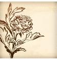 gentle spring chrysanthemum vector image