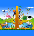 bird kingdom vector image vector image