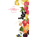 Fruit and berry banner vector image vector image