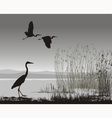Herons vector image vector image