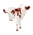 little white cow with red spots vector image