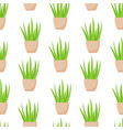 aloe vera plant in pot seamless pattern vector image vector image