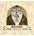 Hand Drawn Portrait of French Bulldog in vector image vector image