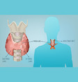 thyroid system image vector image