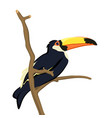 toucan bird isolated on white vector image vector image