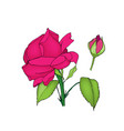 rose flower and bud colored vector image vector image