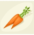 Stylized of fresh ripe carrots vector image vector image