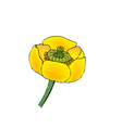 Blooming yellow water-lily vector image