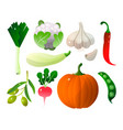 different vegetables pumpkin zucchini pepper city vector image