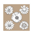 set of wild field flowers - poppy chamomile vector image