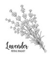bouquet of lavender flowers vector image vector image
