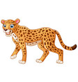 happy leopard cartoon isolated on white background vector image