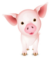 little pig vector image vector image