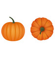 isolated pumpkins vector image vector image