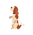 beagle dog standing on its hind legs and wagging vector image vector image