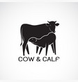 cow and calf on white background farm animal cow vector image