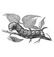 larva of privet hawk moth vintage vector image vector image