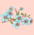 sakura on pink background vector image