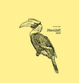 oriental pied hornbill hand draw sketch vector image vector image