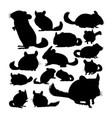 chinchilla animal silhouettes vector image vector image