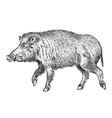 wild boar pig or swine forest animal symbol of vector image vector image