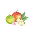 apple fruits composition hand drawn vector image vector image
