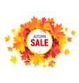 autumn sale flyer with maple leaves on white vector image vector image
