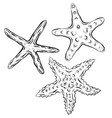 contour black and white of starfish the object is vector image