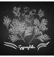 Graphic gypsophila set vector image