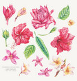 set of vintage floral tropical natural vector image