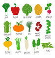collection colorful vegetables vector image vector image