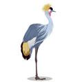 grey crowned crane cartoon vector image vector image
