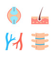 human organs icon set in flat style vector image