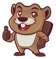 beaver mascot on white vector image vector image