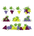 Collection of Grapes Sorts Fruit for Wine Making vector image