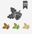 acorn isolated icon vector image vector image